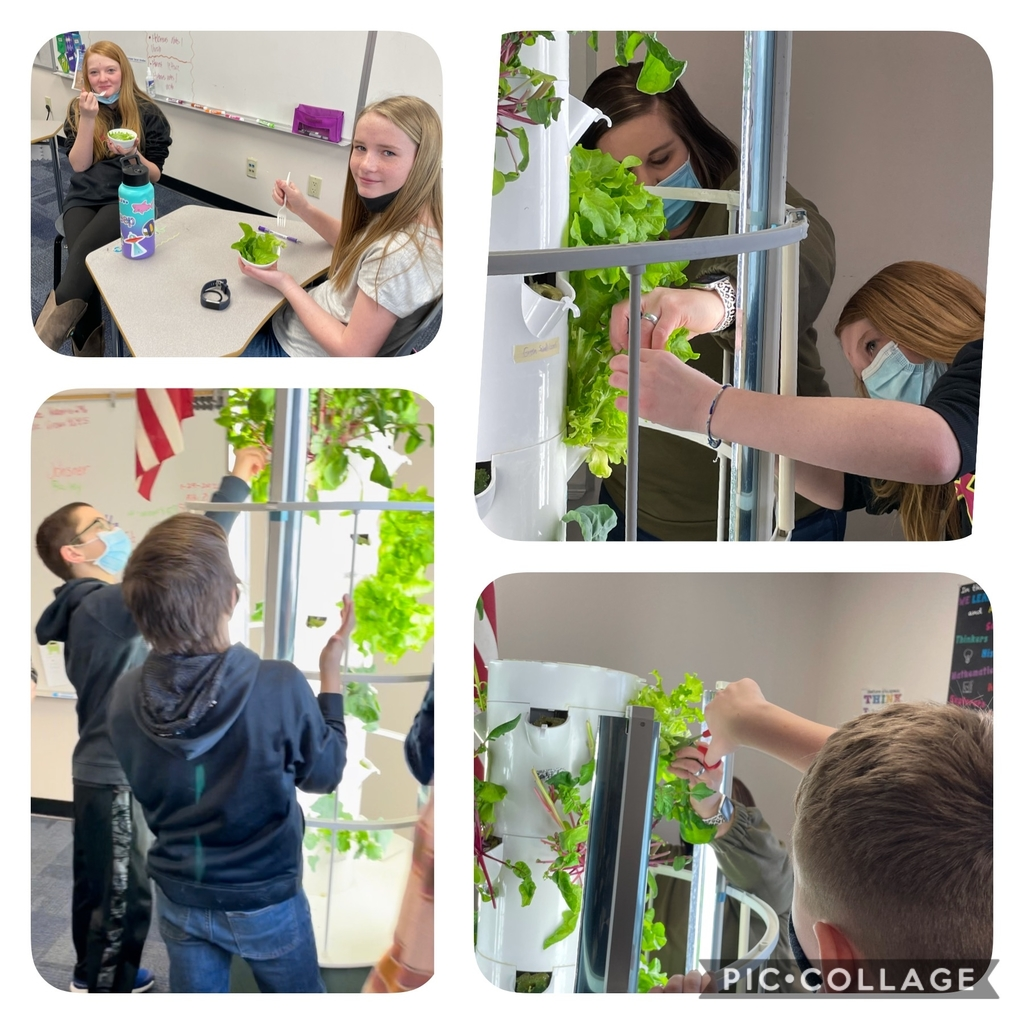 5th & 6th Graders are harvesting lettuce and micro greens from the Tower Garden. Thanks for all your help Kelli Gilbert.